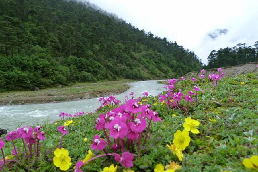 yumthang-valley.png